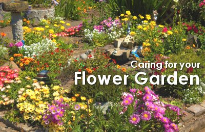 Caring for Your Flower Garden Dot Com Women