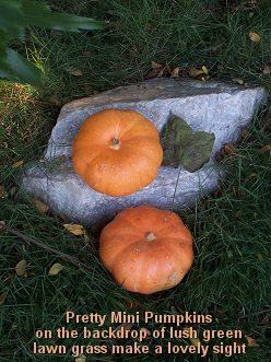 Outdoor Thanksgiving Decorating with Miniature Pumpkins
