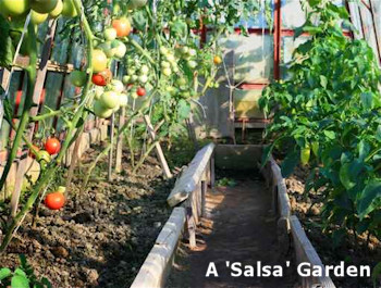 A Salsa Garden - Themed Vegetable Garden Idea