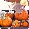 Styrofoam Pumpkins Thanksgiving Table Centerpiece