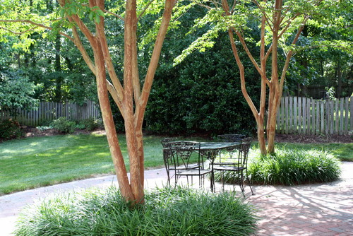 Good Trees For My Backyard : Patios Designed for Multiple Trees Protruding Through the Patio