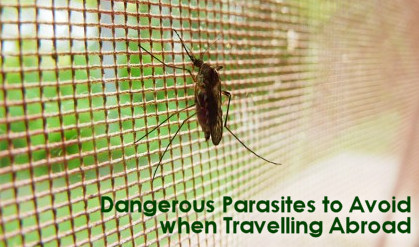 Dangerous Parasites to Avoid when Travelling Abroad