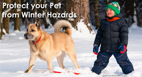 Protect your Pet from Winter Hazards