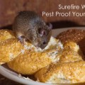 Surefire Ways to Pest Proof Your Home