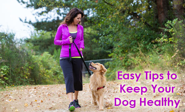 Easy Tips to Help Keep Your Dog Healthy