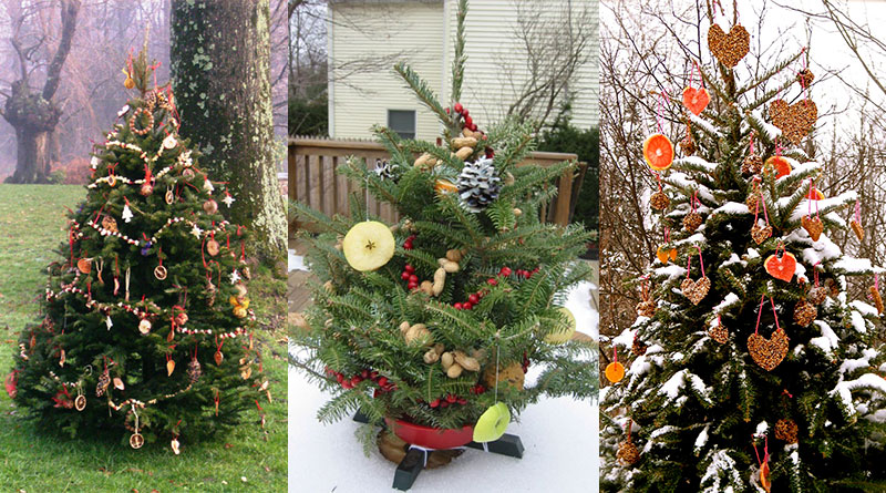 Decorate an Outdoor Holiday Tree for Animals