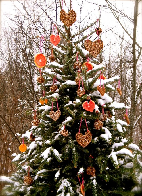 outdoor christmas tree for birds