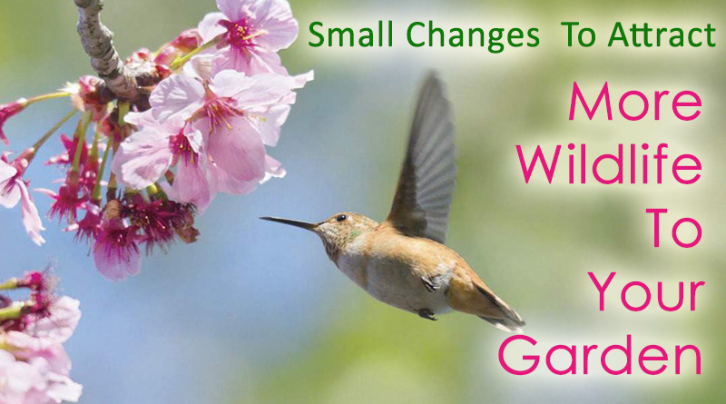 Small Changes You Can Make At Home To Attract More Wildlife To The Garden