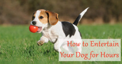 ​How to Entertain Your Dog for Hours